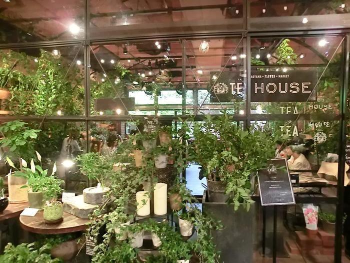 南青山の本店はお花屋さんの奥にカフェ入口があります。このグリーンがいっぱいの雰囲気に心が潤いますね。