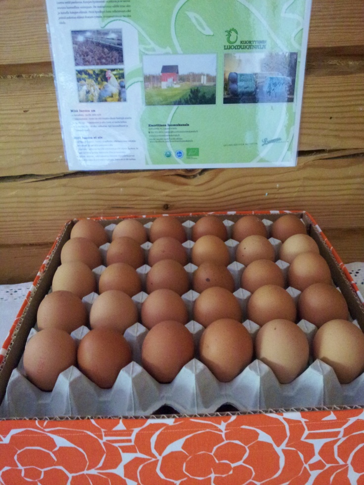 Kuorttisen luomukanalan isoja, mahdottoman maukkaita kananmunia Lappeenrannasta