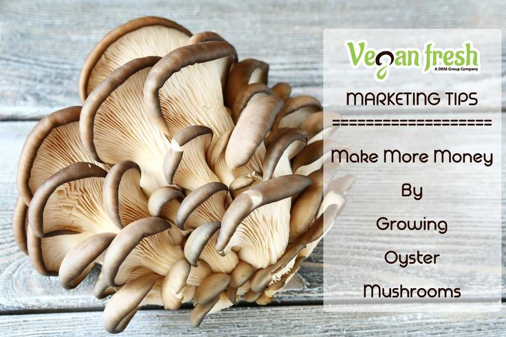 Make More Money By Growing Oyster Mushrooms
