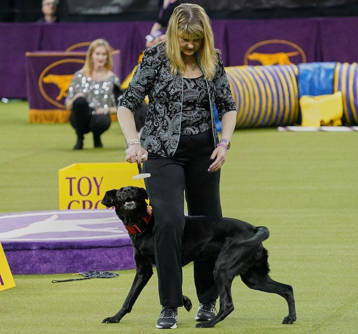 All Heart Lab Wins 5th Westminster Masters Obedience Championship