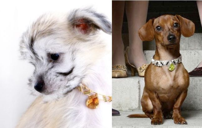 most expensive dog leashes | World's Most Expensive Dog Collars For The Haute Hound. From 150k to $ ...