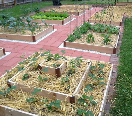 Raised Veggie Beds Would Be A Good Strawberry Patch Farm Flowers Pinterest Gardens