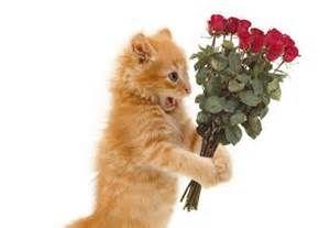 foto simpatiche di gatti - Risultati Yahoo Italia della ricerca di immagini