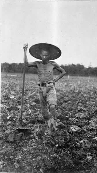 Kuli di perkebunan tembakau. 1915-1925.  Koleksi tropenmuseum 60002421