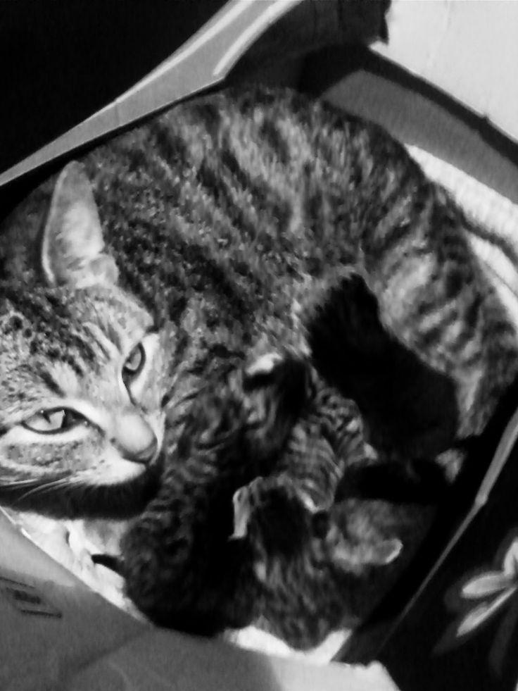 The Recession Kitchen: Family: Kittens! ...Mi-mi-ao Mammy!