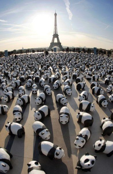"The World Wildlife Fund has just recently set up a huge lot of paper mache Pandas at the ""Parvis des droits de l'Homme at Paris Trocadero esplanade"" to show some love to the Pandas. There are about 1,600 Pandas set up here to represent the number of Pandas that are left in the world. This is set up to show us how small the amount of these awesome animals are left in the   world"