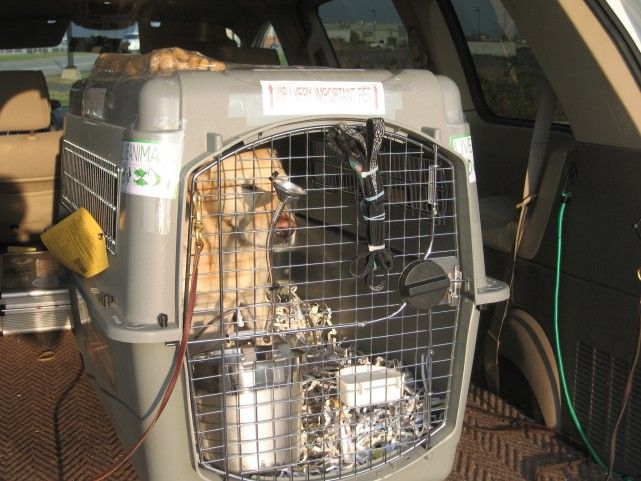 Aeropets are offering pet transport NSW services for your dogs. Each dog or dog family travels with a two person team with the goal of keeping your dog safe and happy and to reunite you with your pets as quickly and safely as possible.