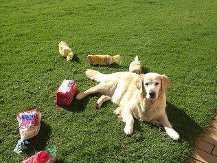 The a boy - Dog steals bread