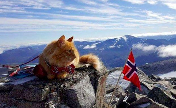 Love this adventure cat! Meet Jesperpus, Confident Outdoors-Loving Cat of Norway http://www.catster.com/lifestyle/social-cat-jesperpus #cats