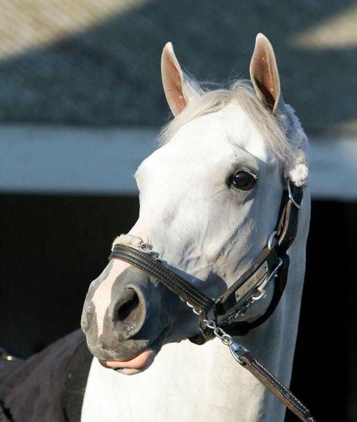 Hansen Horse