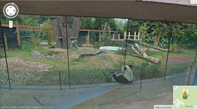 ¿Hace cuánto que no vas a un zoológico? Es más, ¿cuánto tiempo tienes que no visitas el Zoológico de Chapultepec? ¿has tenido contacto con algún animal o mascota últimamente? Si te quedaste en blanco con las últimas tres preguntas pero ... Read More