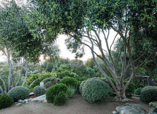 Fiona Brockhoff coastal garden