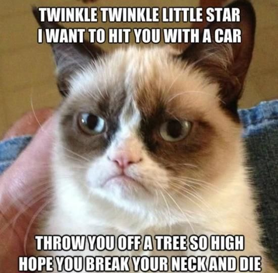 This cat is so mean...but I can't stop laughing.