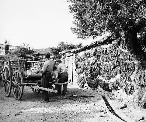 Tloupas.gr -Απλωμένα καπνά Ελάτεια 1960