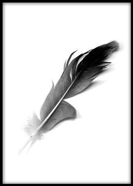 Tavlor och posters i svartvitt med fjäder