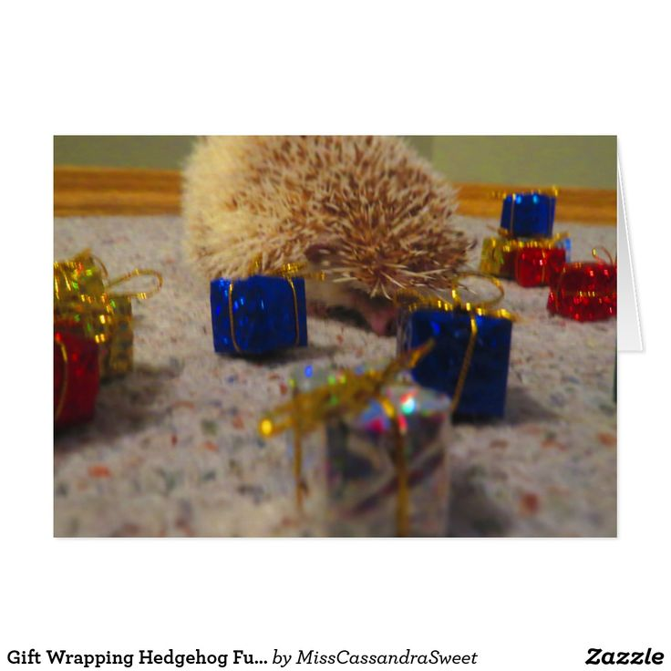 Gift Wrapping Hedgehog Funny Christmas Card