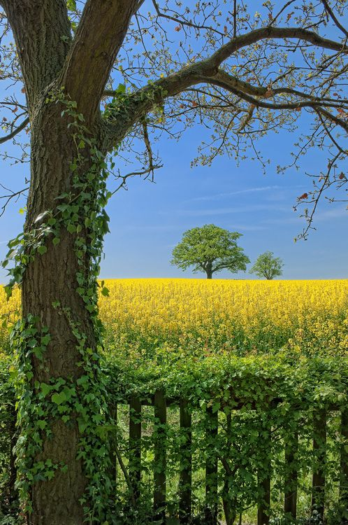Leicestershire, England