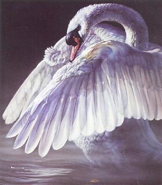 Vivi Crandall Fandango Swan Mint Condition Low On