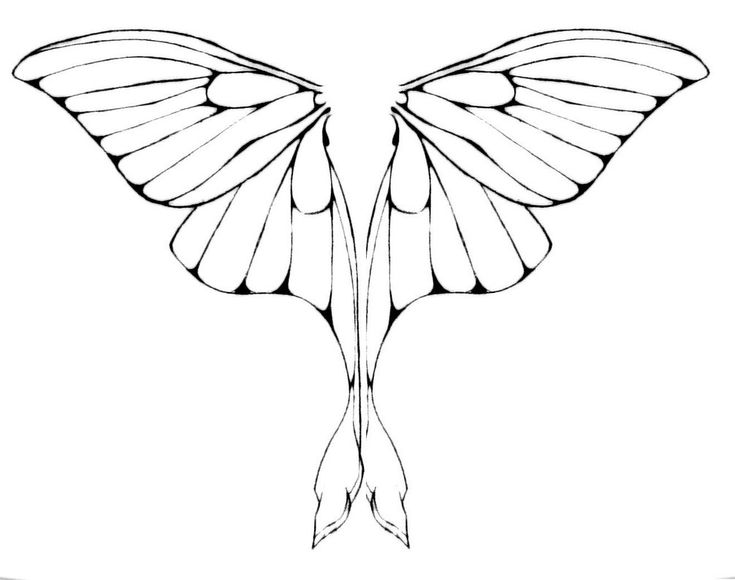 fairy wings to color