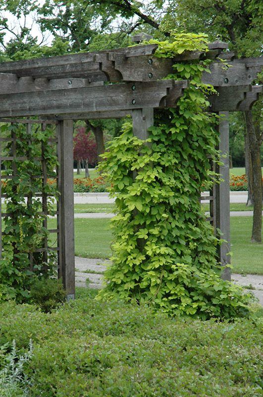 A plant slut s garden