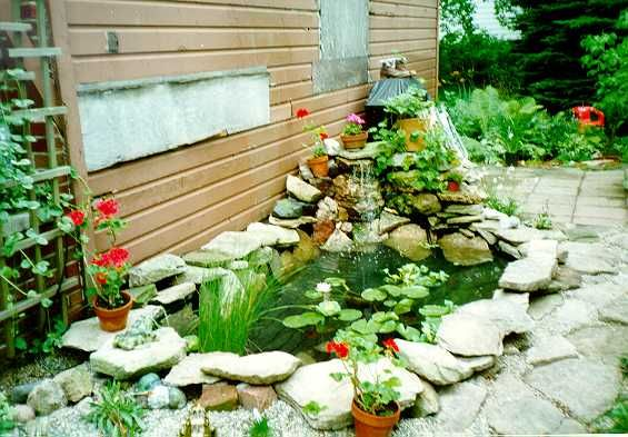 17 best images about small ponds on pinterest backyard for Small pond care