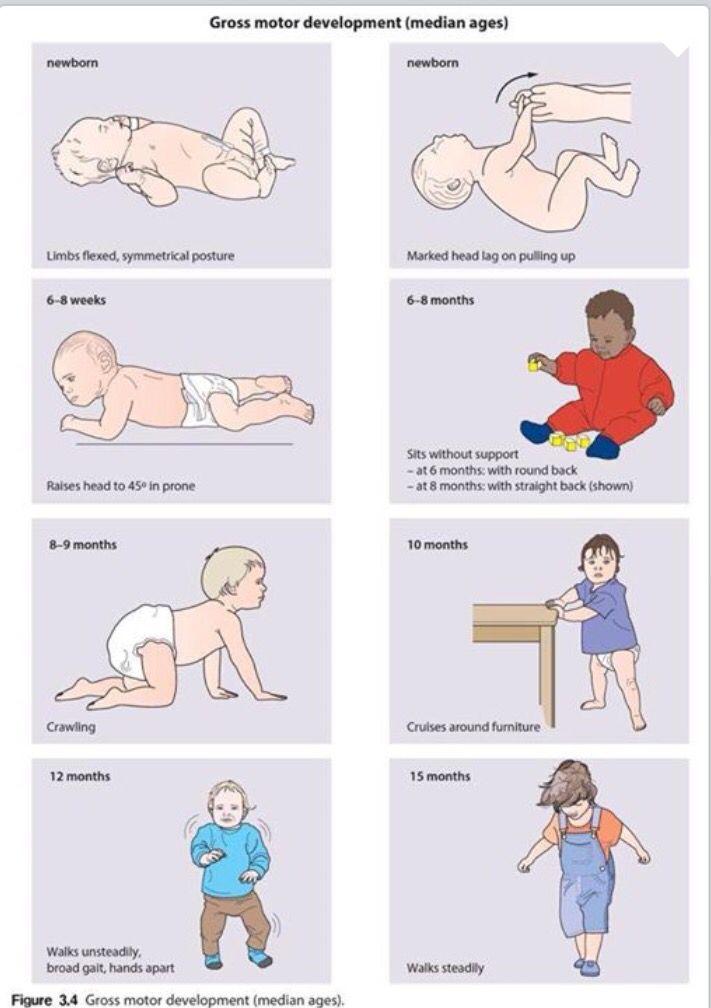 gross motor development | Baby development, Baby ...