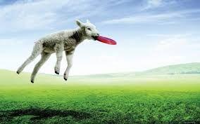 Картинки по запросу овечка