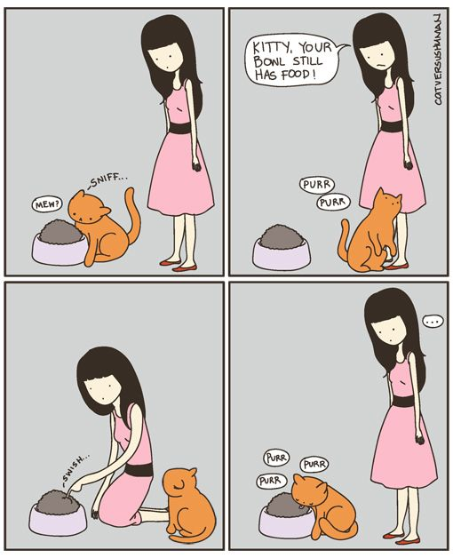 Almost every day: Cats, Time, Cat Logic, Funny Cat, My Life, So True, Crazy Cat, Cat Lady, Animal