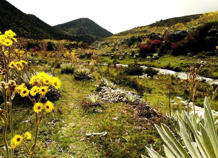 ¡Inolvidables! Imágenes del Páramo de La Culata en el estado Mérida