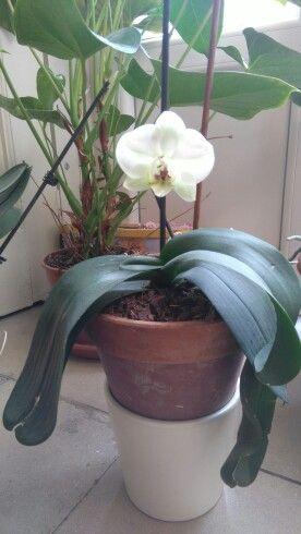 Una delle mie orchidee
