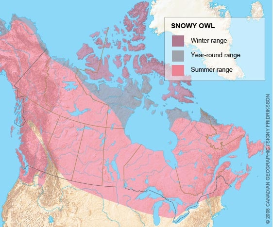 range map for the snowy owl wildlife of bc pinterest snowy owl animal facts and montessori. Black Bedroom Furniture Sets. Home Design Ideas