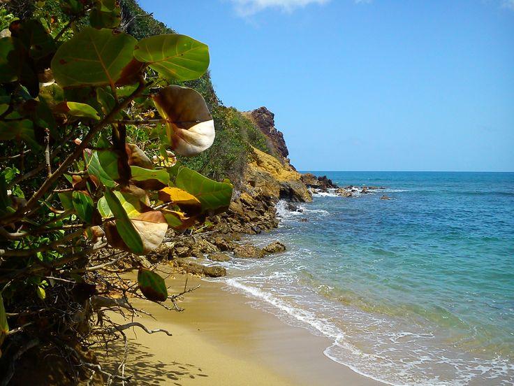 Martinique, La Caravelle... Pointe Rouge.