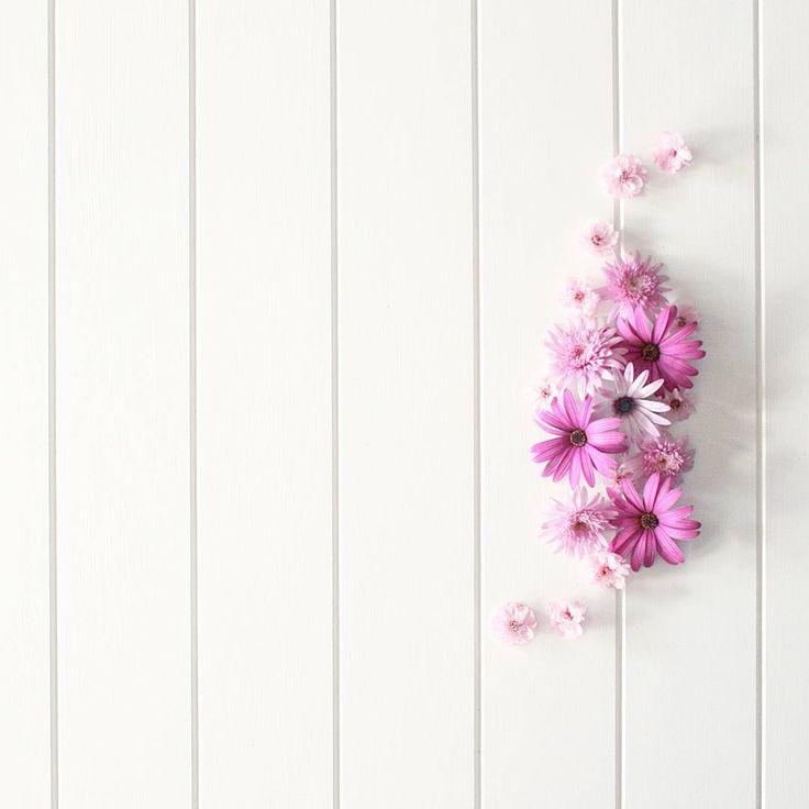 фоновые картинки для инстаграмма растения