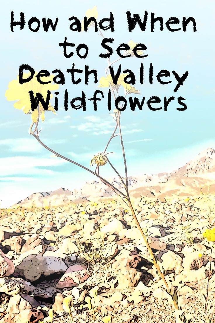 The Ultimate Death Valley Tour