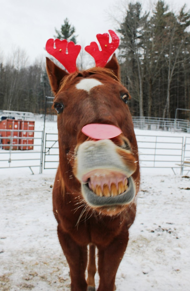 76 best christmas costume images on pinterest horses merry