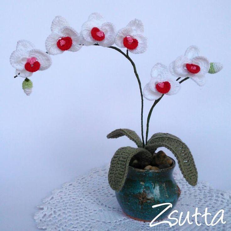 zsutta: Mini orchidea