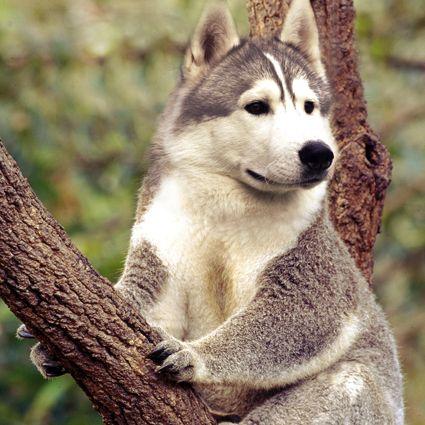 Koalasky by Chris Lonneux, via Behance