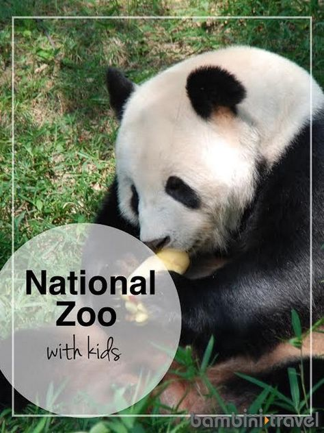 National Zoo : Washington DC with Kids | Tips and Information for visiting this FREE zoo in the nation's capitol with kids | Bambini Travel