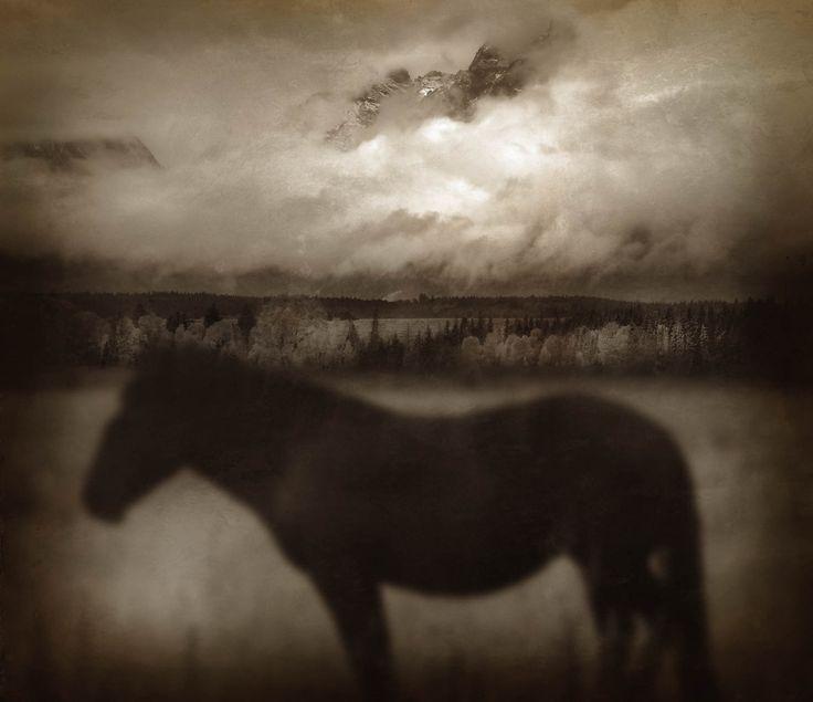 DARK_HORSE
