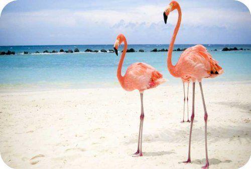 Rikki Knight Pink Flamingo Small tempered glass Cutting board Workspace Saver…