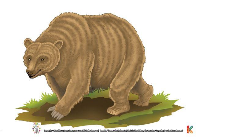 Beruang Grizzly Bisa Tidur selama 7 Bulan