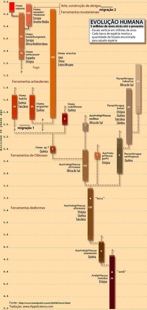 No gráfico, você confere as peças da árvore genealógica humana que abrange nossa evolução desde 5 milhões de anos atrás até o presente.
