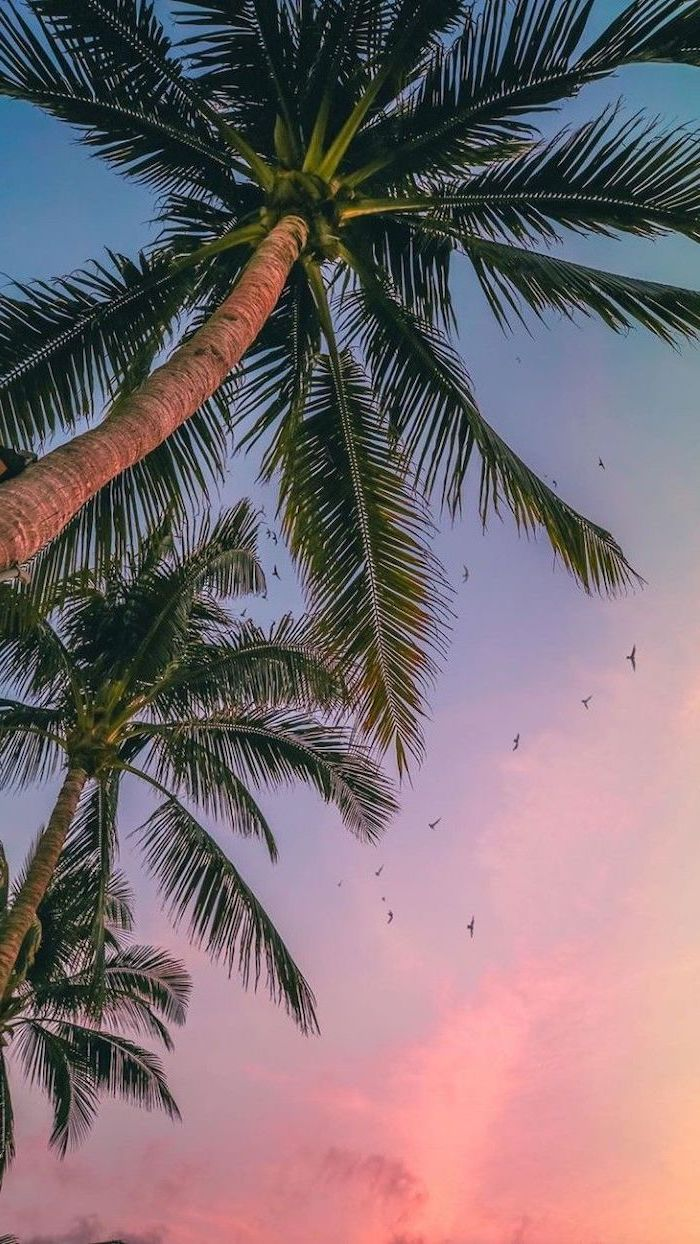 Tall Palm Trees Cute Phone Backgrounds Sunset Purple Orange Sky Black Birds In 2020 Palm Trees Wallpaper Summer Wallpaper Cute Summer Wallpapers