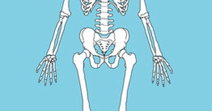 Como fazer um modelo de esqueleto humano. Você pode construir um modelo de esqueleto humano que demonstre as interligações complexas do sistema esquelético. O corpo humano contém 206 ossos separados. Pequenos ossos das mãos e dos pés são responsáveis por cerca de metade do total de ossos do esqueleto humano. O modelo de esqueleto que você fizer só precisa detalhar os ossos que você ...