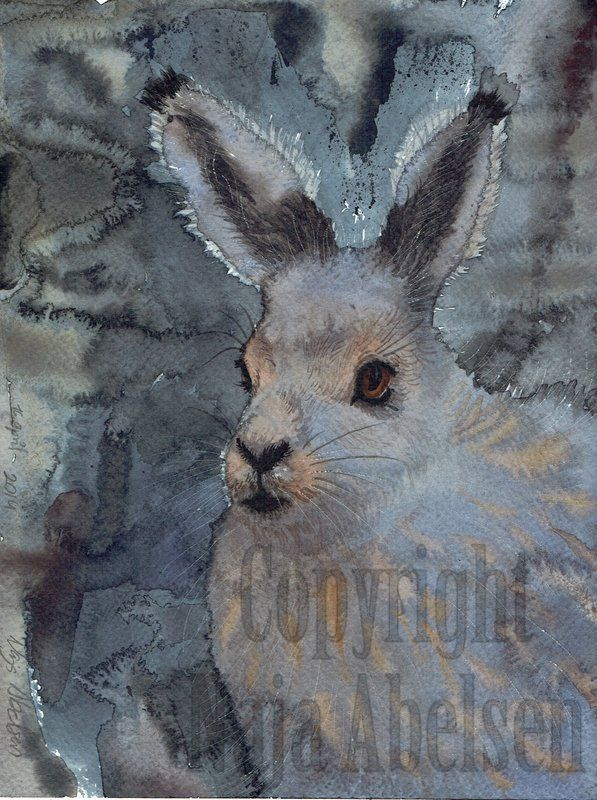 Moon Hare. A polar hare in the dim light of night, its in the shedding period, seen most clearly on the ears. 18 x 24 cm april 2014. By Naja Abelsen. Original sold. Available as A3 Artprint for 54 euro, plus freight. www.najaabelsen.dk