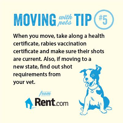 When you move, take along a health certificate, rabies vaccination certificate and make sure their shorts are current. Also, if moving to a new state, find out shot requirements from your vet.  Get more moving tips in the Rent.com Moving Center.