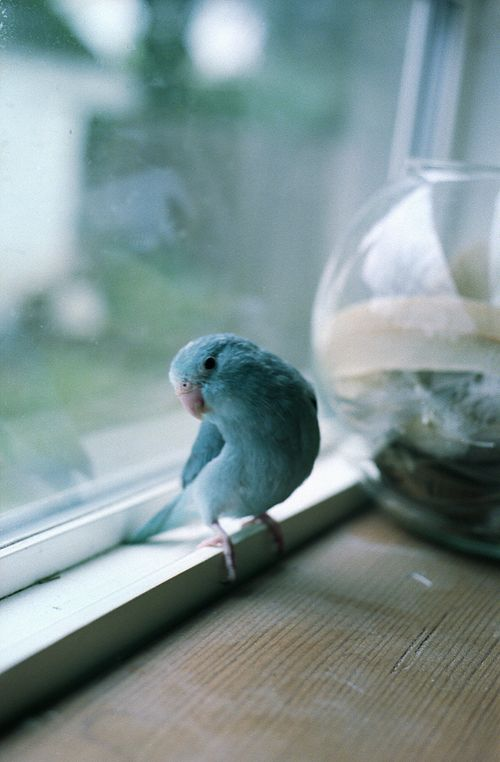 How Much Is That Birdie in the Window?