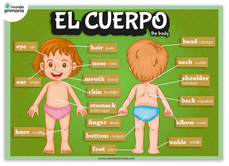 Infografía de las partes del cuerpo humano, en castellano y su nombre correspondiente en inglés.