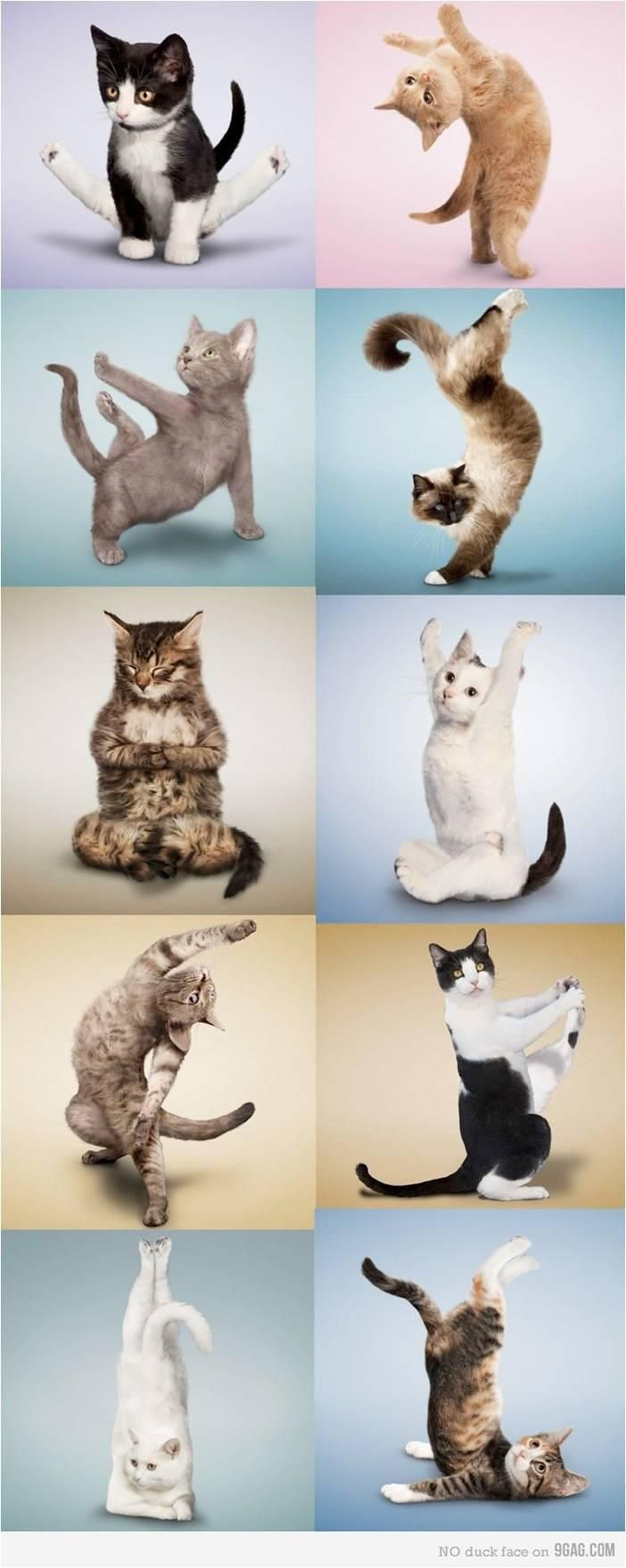 La gymnastique du chat !!