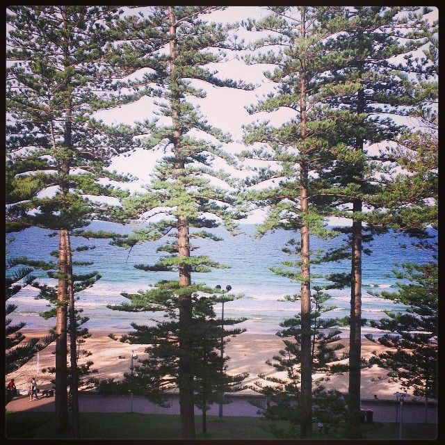 #365Gratefuls #Spoonie Day 78: So grateful 4 this view I woke up to in Manly, Sydney & to be here 4 my first internet biz conference #SFBLIVE Have met some awesome ppl & learned lots, while also having a gr8 meal & entertainment provided tonight. Thanks #JamesSchramko